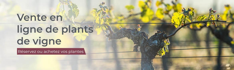 vente en ligne de plants de vigne